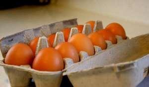 盒装鸡蛋孵出小鸡?瑞典女子21天后终于等到它