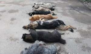 补营养毒杀8只狗 令人发指!看到路边有狗就杀掉装进后备箱
