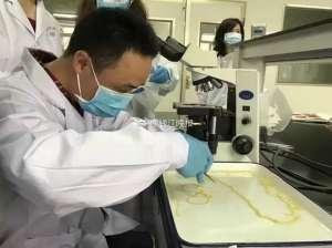 温州男子吃了块五分熟牛排 排出一条5米多长虫子