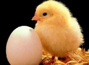 先有鸡还是先有蛋?科学家哲学家终于给出解释 看完您觉得满意吗?