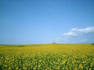 李连杰修行结束频繁亮相可惜再不是当年的黄